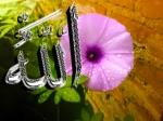 foto kaligrafi